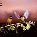 Love Birds By John Junek  by John Junek