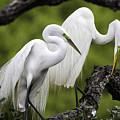 Love Birds by Fran Gallogly