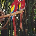 Love Birds by Michelle Powell