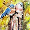 Love Birds by Paul Sandilands