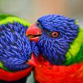 Love Birds by Robert Coffey