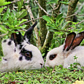 Love Bunnies In Costa Rica by Peggy Collins