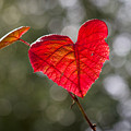Love Heart by Clare Bambers