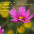 Love Is Appreciation by Sharin Gabl