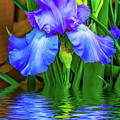 Love Is Blue 2 by Steve Harrington