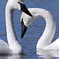 Love by Larry Ricker