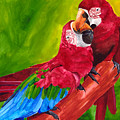 Love Macaws by Dawnstarstudios