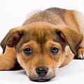 Love Me Puppy by Dean Birinyi