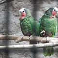 Love Parrots by Sergio Hernandez