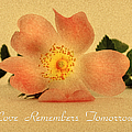 Love Remembers Tomorrow by Georgiana Romanovna
