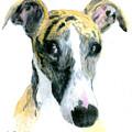 Love That Whippet by Ann Radley