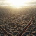 Love The Beach by Jim Ferro