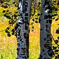 Love Trees by Tikvah's Hope
