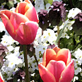 Love Tulips by Mary Gaines