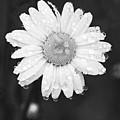 Love Weeps by Floyd Aldrich