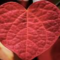 Love by Zita Blazuk