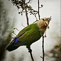 Lovebird  by Saija  Lehtonen
