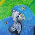 Lovebirds by Cassy Allsworth