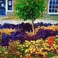 Lovely Colors by Deborah Selib-Haig DMacq