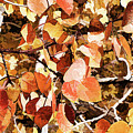 Lovely Fall Leaves by Susan Campbell