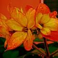 Lovely Flowers1 by Nilu Mishra