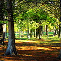 Lovely Grouping Of Trees In Mississippi by Anita Hiltz