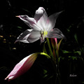 Lovely Lilies Partners by Felipe Adan Lerma