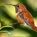 Lovely Little Bird by Bill Dodsworth