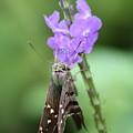 Lovely Moth On Dainty Flower by Carol Groenen