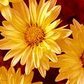 Lovely Mums by Patricia L Davidson