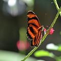 Lovely Orange Oak Tiger In The Spring by DejaVu Designs