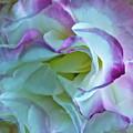 Lovely Rita by Gwyn Newcombe
