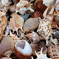 Lovely Seashells by Carol Groenen