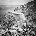 Lover's Cove Catalina Island Black And White Photo by Paul Velgos