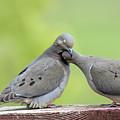 Lovey Doveys by Judi Dressler