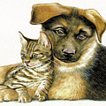Loving Cat And Dog by Johannes Margreiter