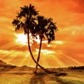 Loving Trees by Sarah Kirk