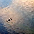 Low Flight by Mal Bray