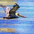 Low Flying Pelican by Alice Gipson