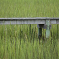 Lowcountry Dock Over Marsh Grass by Dustin K Ryan