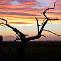 Lowcountry Sunset by Jo Marie Brown
