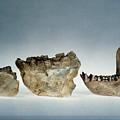 Lower Jawbones by Granger