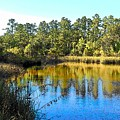Lower Suwannee National Wildlife Refuge Ti by Sheri McLeroy