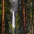 Lower Yosemite Falls by Anthony Bonafede