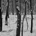 Lowland Winter by Dylan Punke