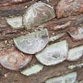 Lucky Coins Ix by Helen Northcott