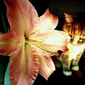 Lucy With Lily by Christine Zipps