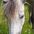 Lulu The Welsh Pony by Angela Doelling AD DESIGN Photo and PhotoArt