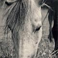 Lulu The Welsh Pony Bw by Angela Doelling AD DESIGN Photo and PhotoArt