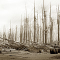Lumber Docks Havana Cuba 1898 by California Views Archives Mr Pat Hathaway Archives